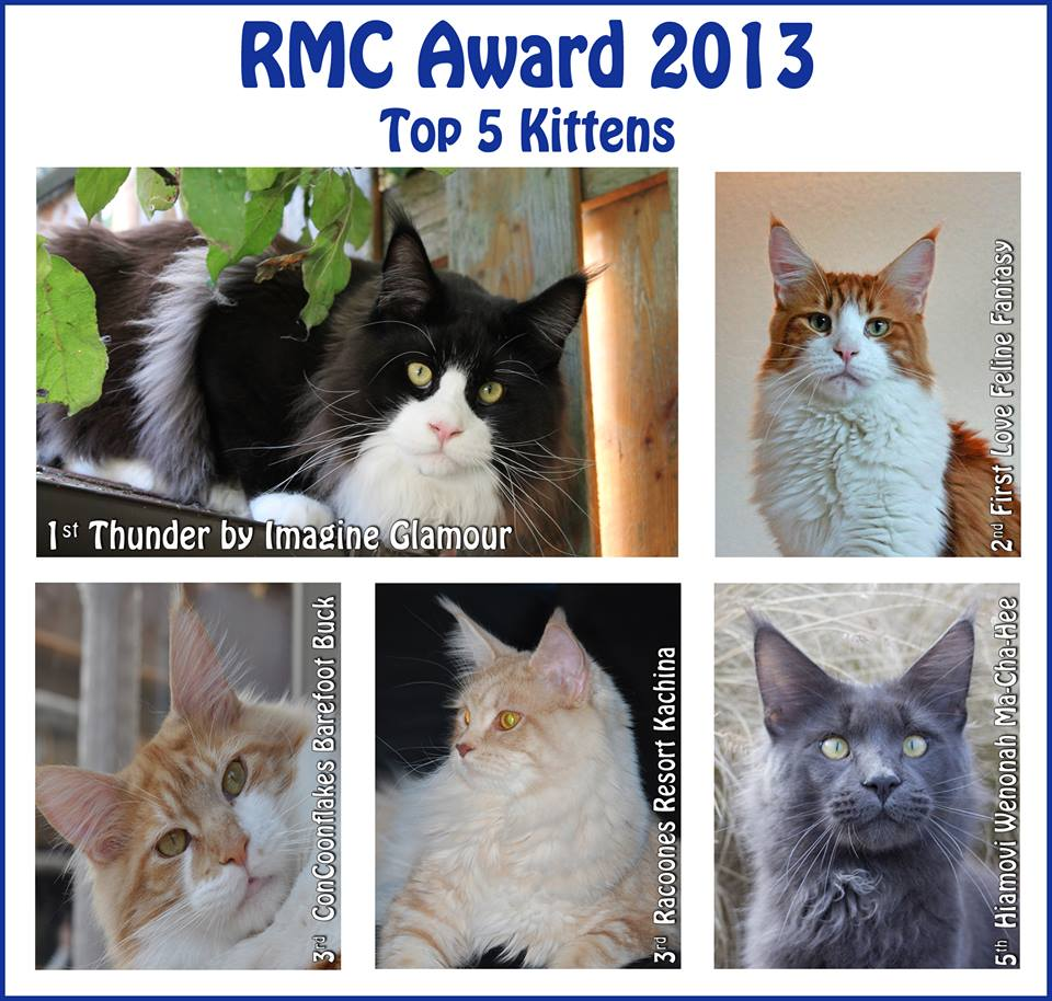 RMC Award 2013 Kittens