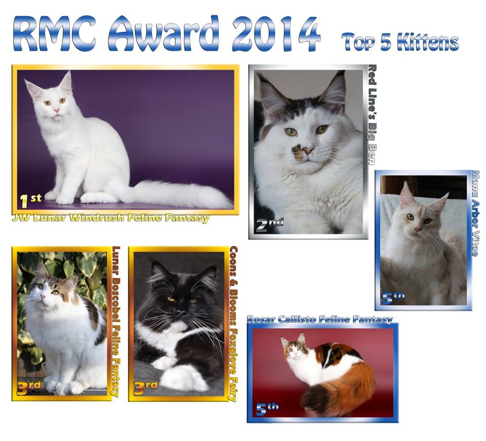 RMC Award 2014 Kittens